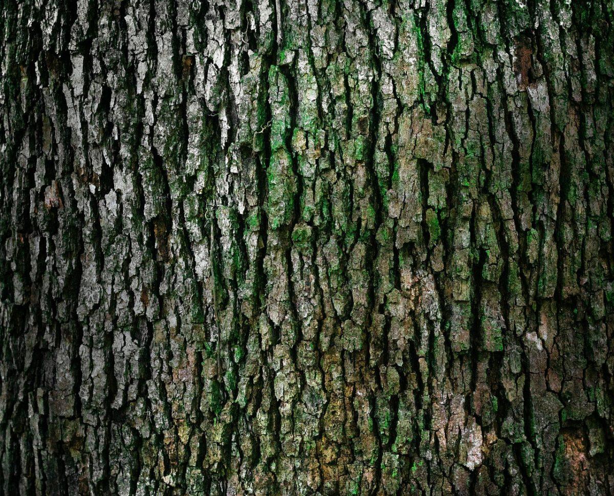 Ładny oraz {zadbany zieleniec to nie lada wyzwanie, zwłaszcza jak jego konserwacją zajmujemy się sami.